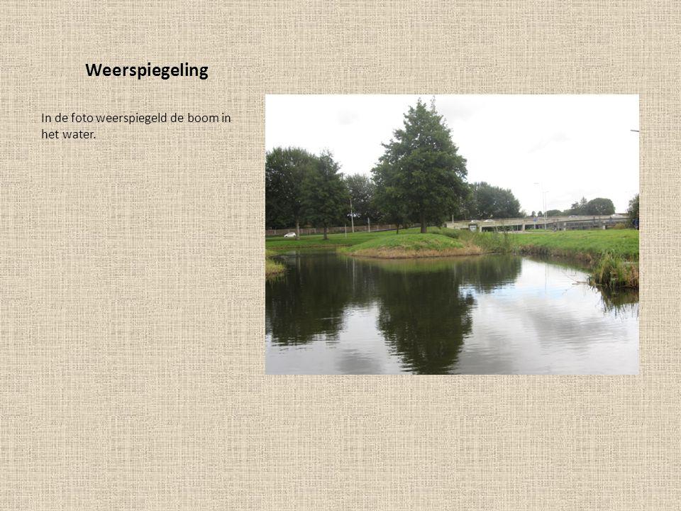 Weerspiegeling Het gras en het riet weerspiegelen mooi in het water.