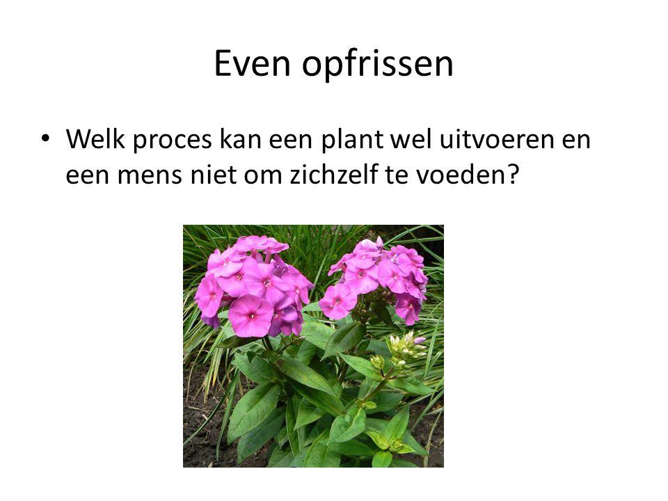 Even opfrissen • Welk proces kan een plant wel uitvoeren en een mens niet om zichzelf te voeden?