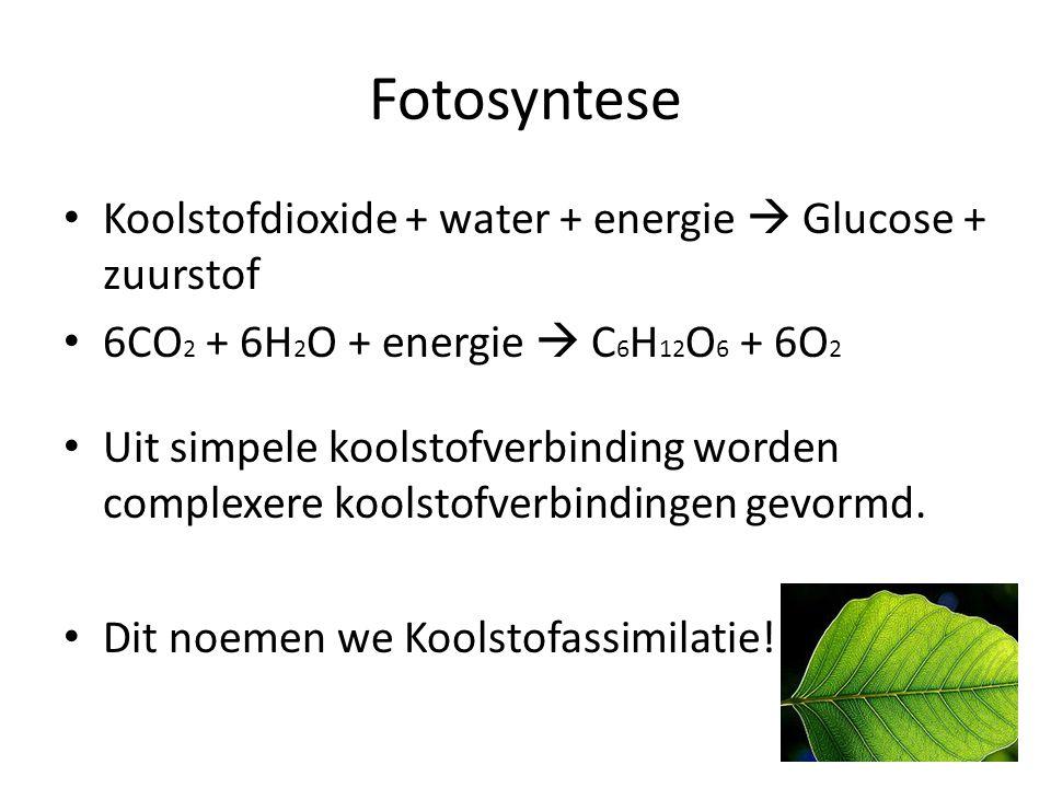 Fotosyntese • Koolstofdioxide + water + energie  Glucose + zuurstof • 6CO 2 + 6H 2 O + energie  C 6 H 12 O 6 + 6O 2 • Uit simpele koolstofverbinding
