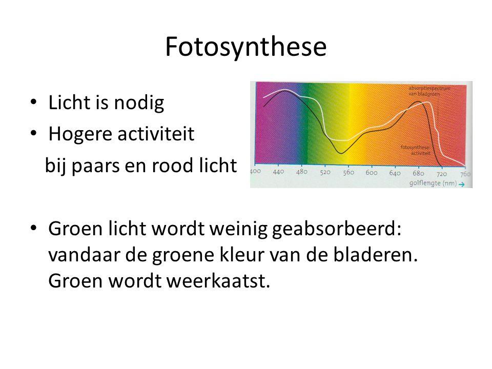 Fotosynthese • Licht is nodig • Hogere activiteit bij paars en rood licht • Groen licht wordt weinig geabsorbeerd: vandaar de groene kleur van de bladeren.