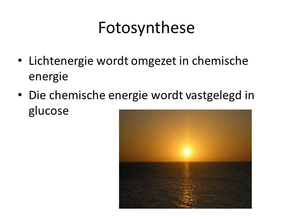 Fotosynthese • Lichtenergie wordt omgezet in chemische energie • Die chemische energie wordt vastgelegd in glucose