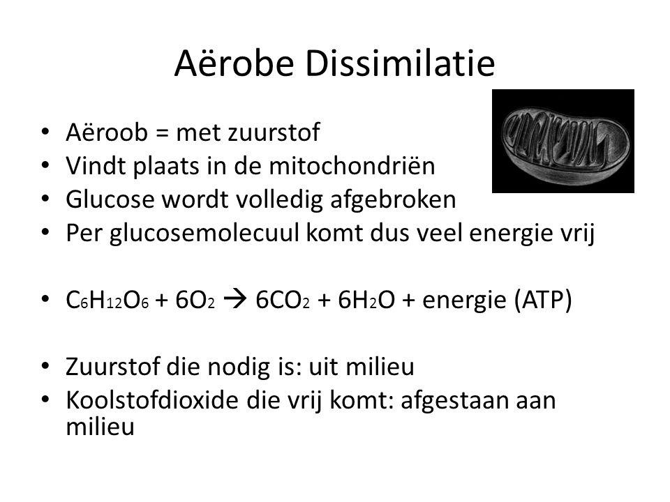 Aërobe Dissimilatie • Aëroob = met zuurstof • Vindt plaats in de mitochondriën • Glucose wordt volledig afgebroken • Per glucosemolecuul komt dus veel energie vrij • C 6 H 12 O 6 + 6O 2  6CO 2 + 6H 2 O + energie (ATP) • Zuurstof die nodig is: uit milieu • Koolstofdioxide die vrij komt: afgestaan aan milieu