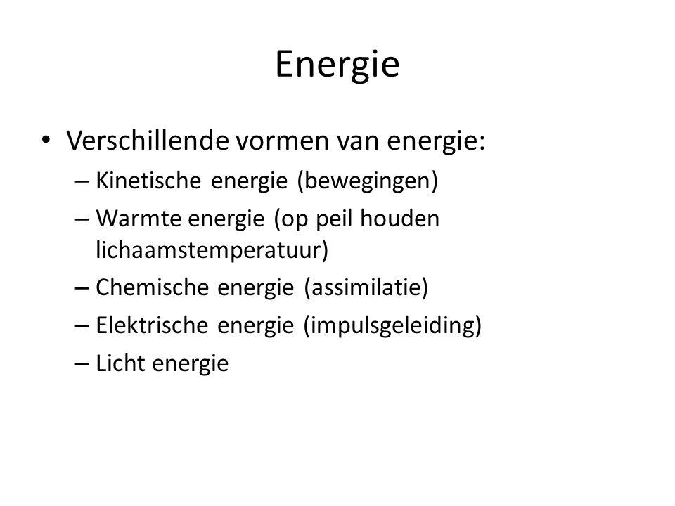 Energie • Verschillende vormen van energie: – Kinetische energie (bewegingen) – Warmte energie (op peil houden lichaamstemperatuur) – Chemische energie (assimilatie) – Elektrische energie (impulsgeleiding) – Licht energie