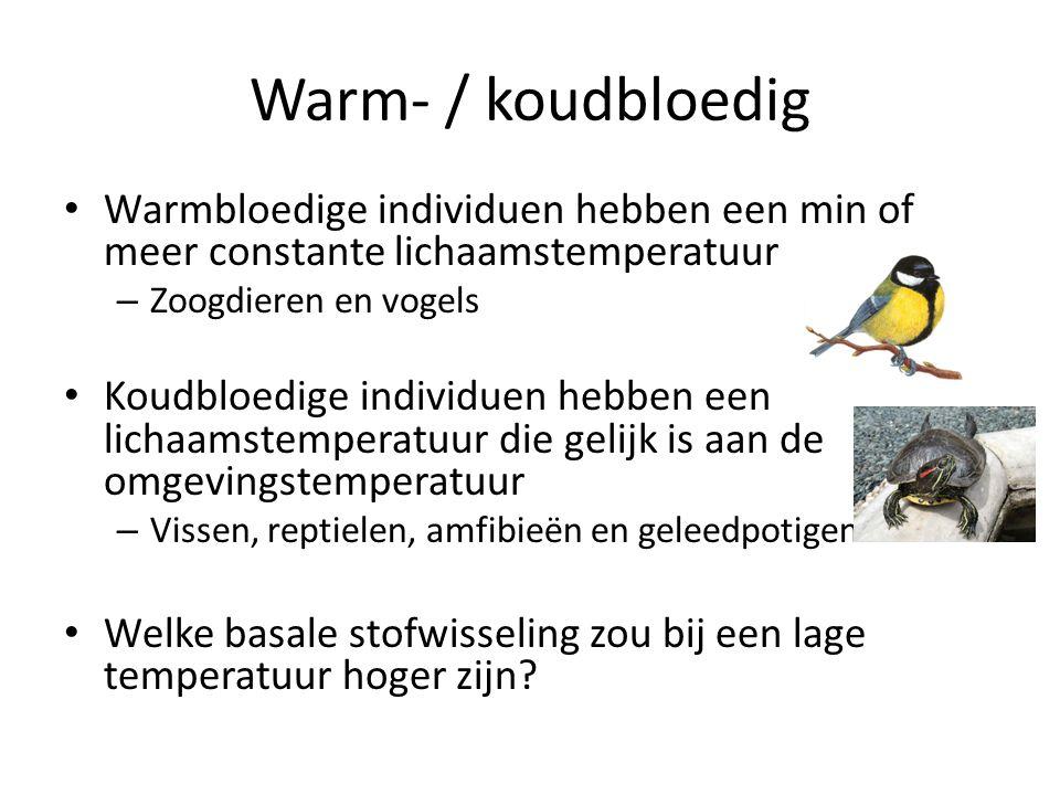 Warm- / koudbloedig • Warmbloedige individuen hebben een min of meer constante lichaamstemperatuur – Zoogdieren en vogels • Koudbloedige individuen hebben een lichaamstemperatuur die gelijk is aan de omgevingstemperatuur – Vissen, reptielen, amfibieën en geleedpotigen • Welke basale stofwisseling zou bij een lage temperatuur hoger zijn?