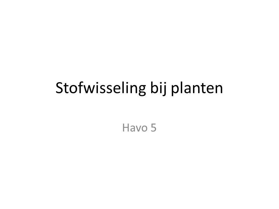 Stofwisseling bij planten Havo 5