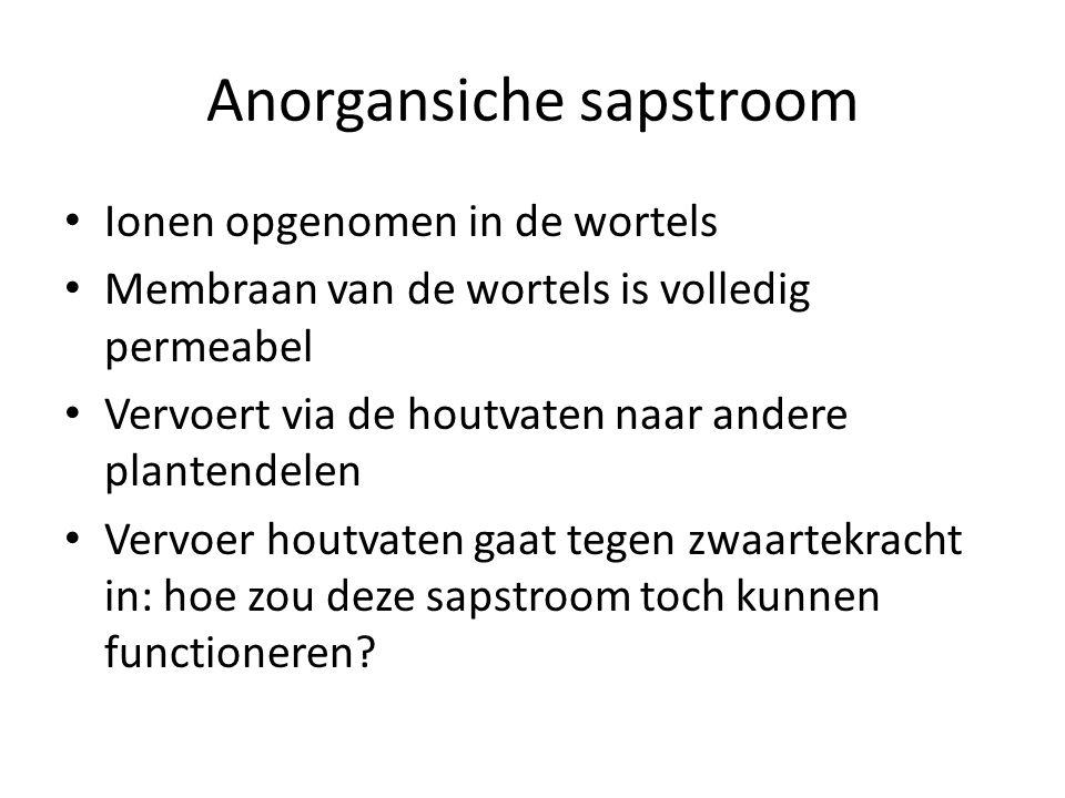 Anorgansiche sapstroom • Ionen opgenomen in de wortels • Membraan van de wortels is volledig permeabel • Vervoert via de houtvaten naar andere planten