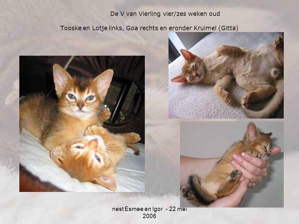 nest Esmee en Igor - 22 mei 2006 Tooske en Lotje links, Goa rechts en eronder Kruimel (Gitta) De V van Vierling vier/zes weken oud