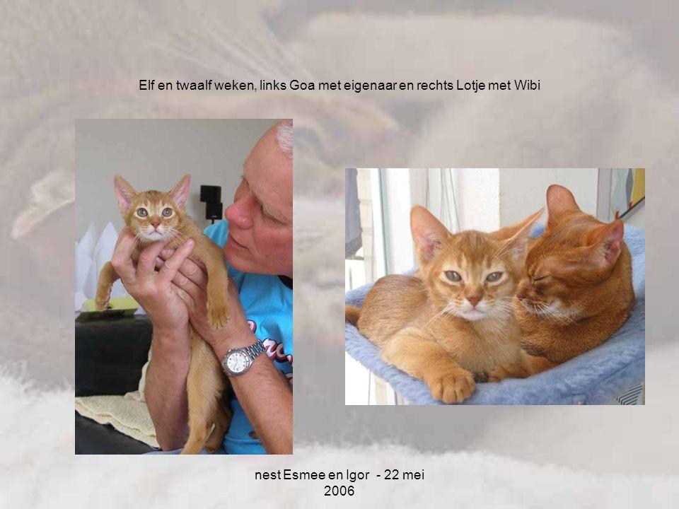 nest Esmee en Igor - 22 mei 2006 Elf en twaalf weken, links Goa met eigenaar en rechts Lotje met Wibi