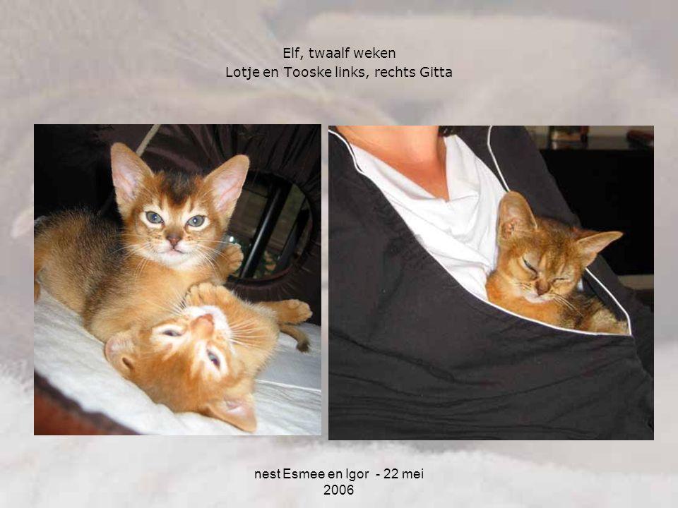 nest Esmee en Igor - 22 mei 2006 Elf, twaalf weken Lotje en Tooske links, rechts Gitta