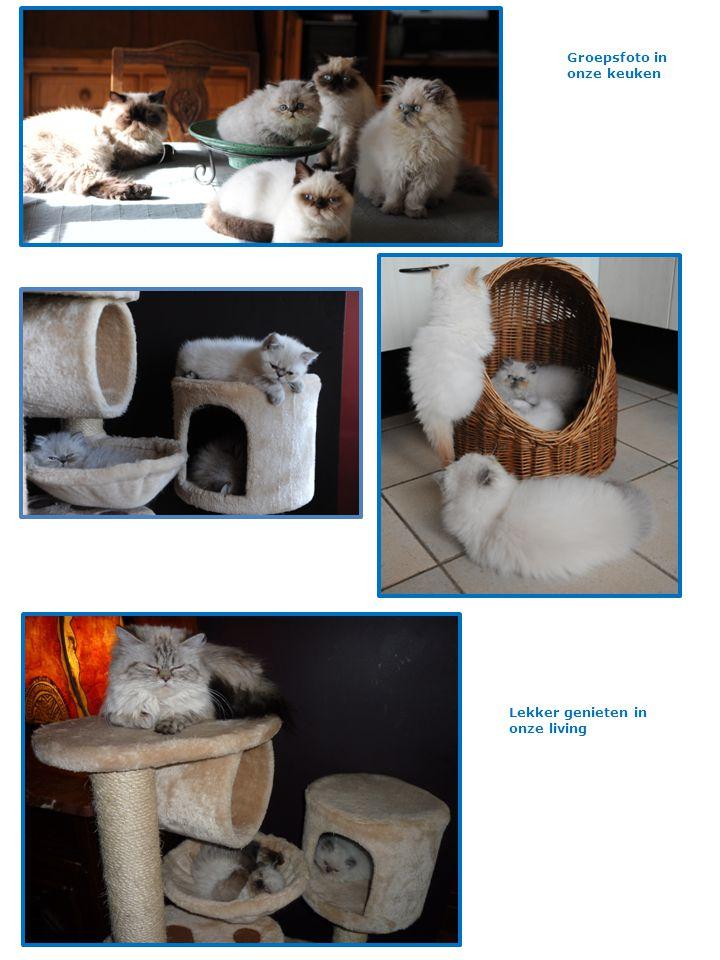 In de dierenspeciaalzaak op bezoek en bijblijven met de nieuwste ontwikkelingen, hier op gebied van het kattenzand.