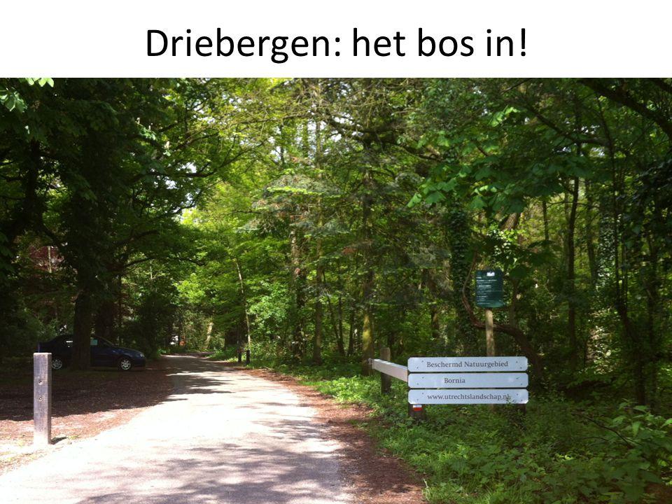 8 Driebergen: het bos in!