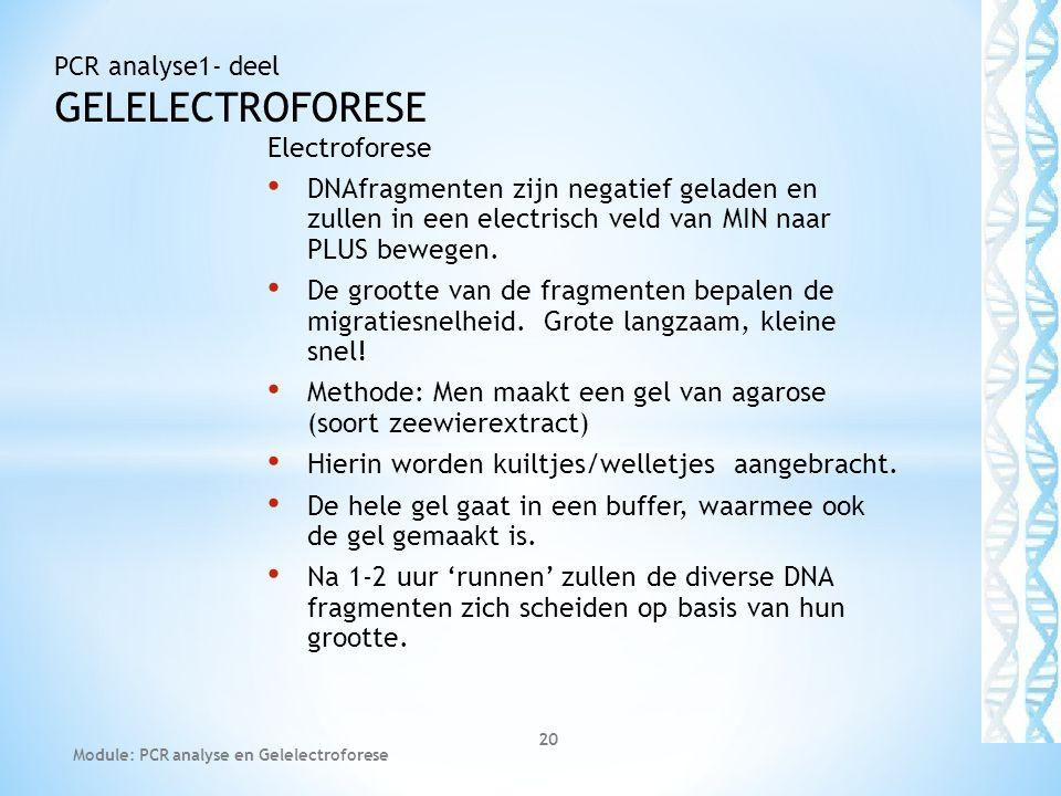 Electroforese • DNAfragmenten zijn negatief geladen en zullen in een electrisch veld van MIN naar PLUS bewegen. • De grootte van de fragmenten bepalen