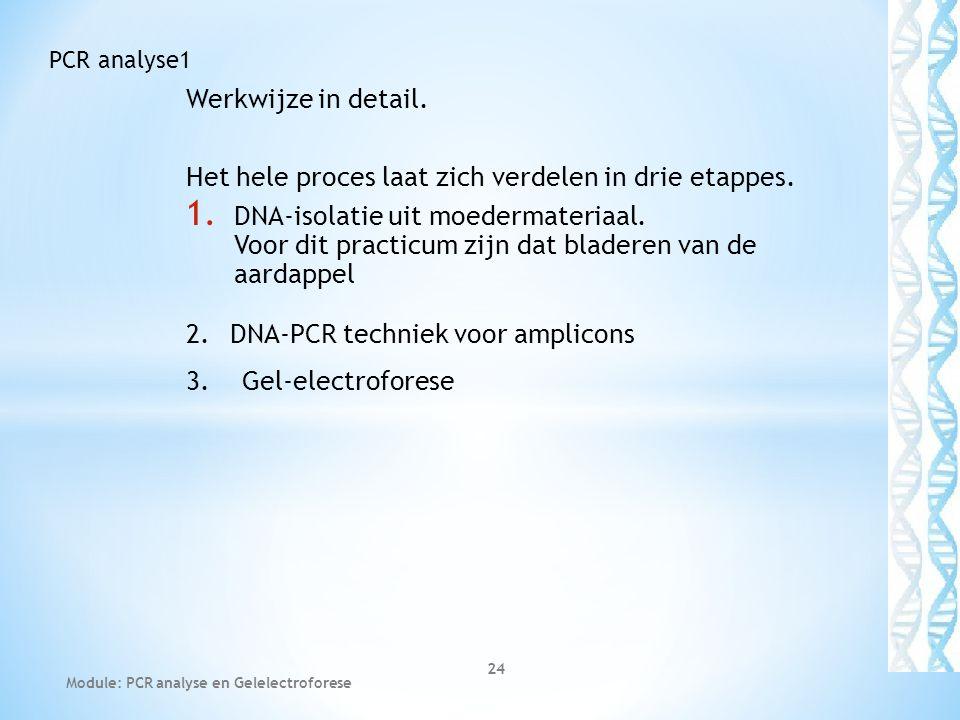 Werkwijze in detail. Het hele proces laat zich verdelen in drie etappes. 1. DNA-isolatie uit moedermateriaal. Voor dit practicum zijn dat bladeren van