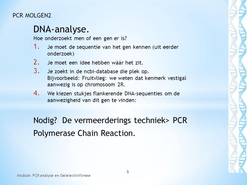 DNA-analyse. Hoe onderzoekt men of een gen er is? 1. Je moet de sequentie van het gen kennen (uit eerder onderzoek) 2. Je moet een idee hebben wáár he