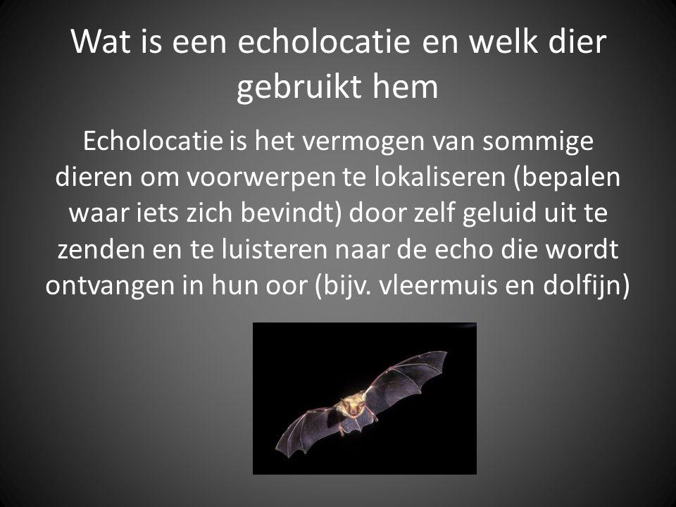 Wat is een echolocatie en welk dier gebruikt hem Echolocatie is het vermogen van sommige dieren om voorwerpen te lokaliseren (bepalen waar iets zich b