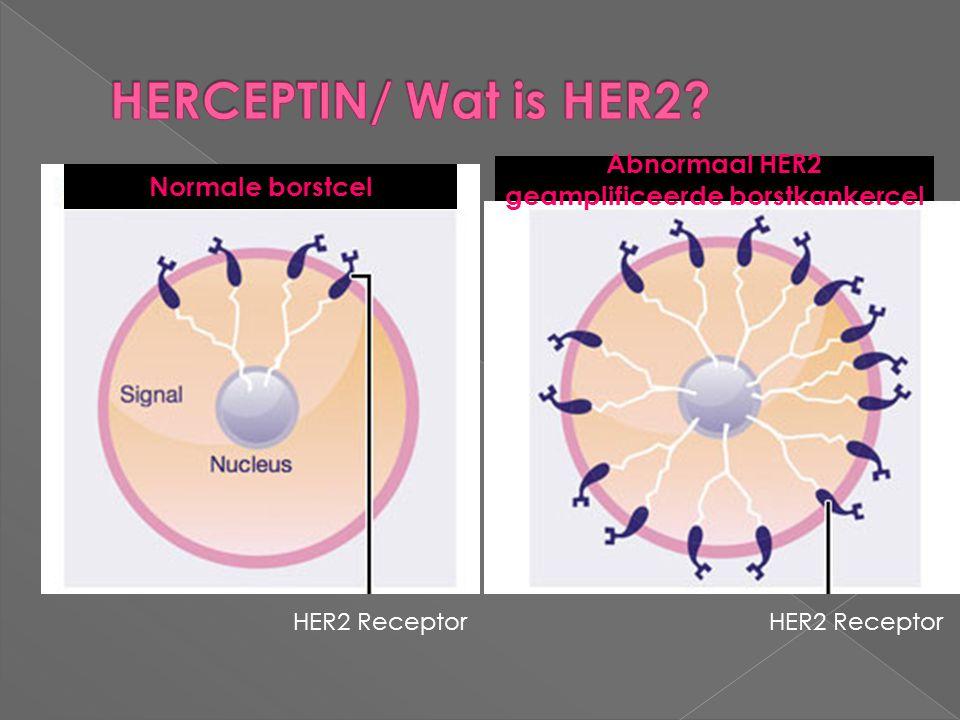 Normale borstcel Abnormaal HER2 geamplificeerde borstkankercel HER2 Receptor