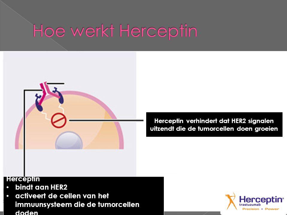 Herceptin • bindt aan HER2 • activeert de cellen van het immuunsysteem die de tumorcellen doden Herceptin verhindert dat HER2 signalen uitzendt die de