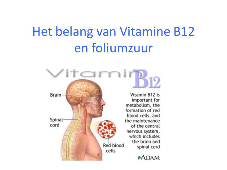 Het belang van Vitamine B12 en foliumzuur