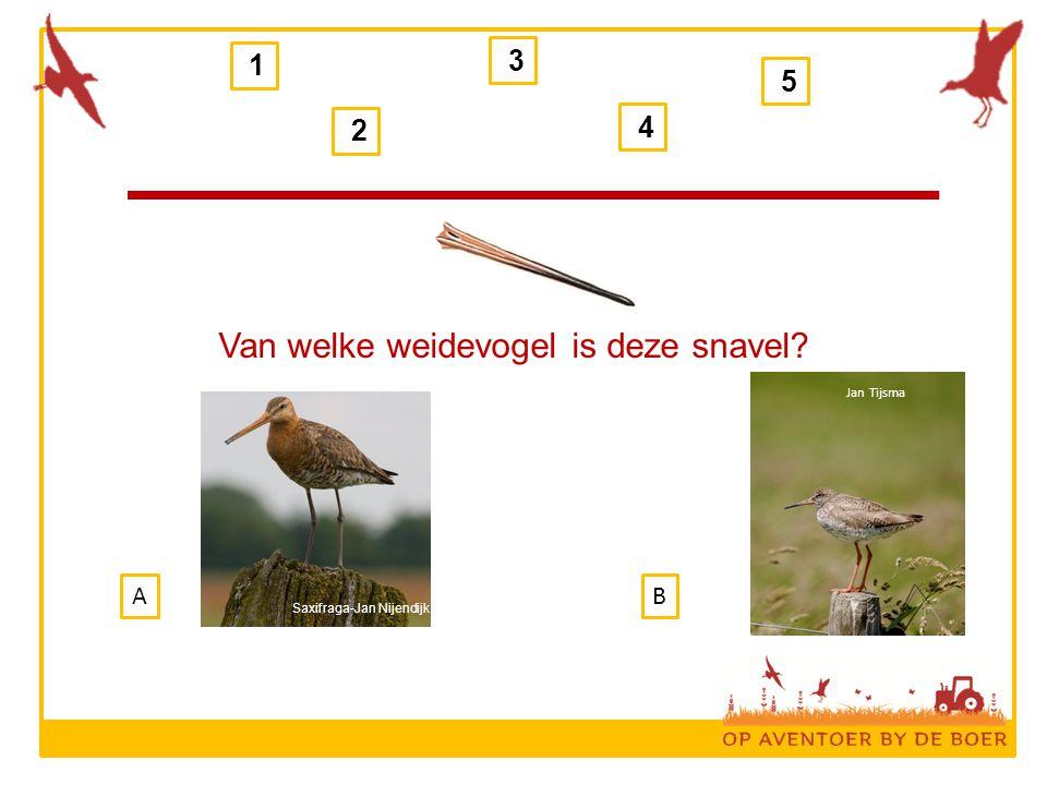 1 2 3 4 5 B Van welke weidevogel is deze snavel? A Jan Tijsma Saxifraga-Jan Nijendijk