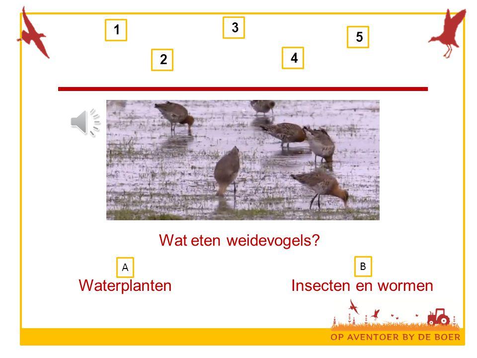 1 2 3 4 5 Wat eten weidevogels? WaterplantenInsecten en wormen B A