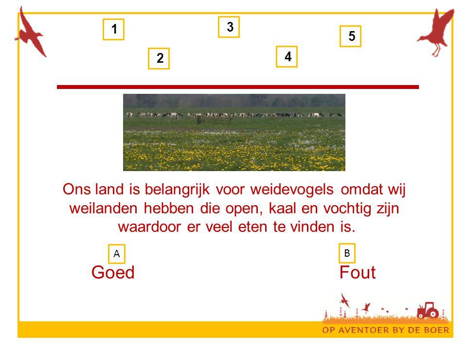 1 2 3 4 5 Ons land is belangrijk voor weidevogels omdat wij weilanden hebben die open, kaal en vochtig zijn waardoor er veel eten te vinden is.