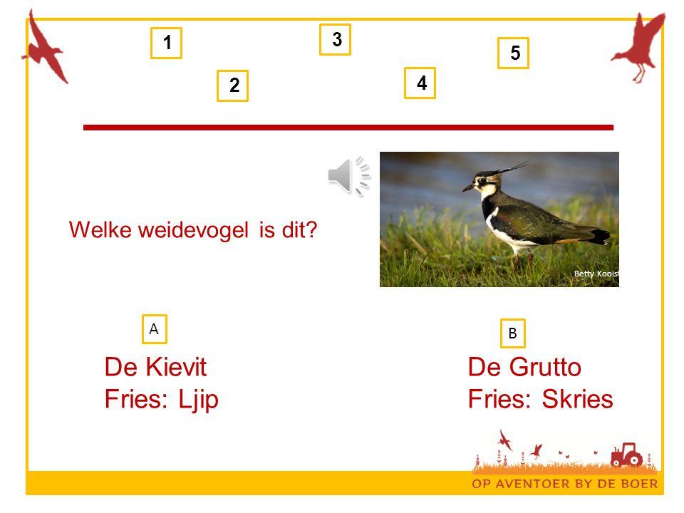 Welke weidevogel is dit? De Kievit Fries: Ljip De Grutto Fries: Skries 1 2 3 4 5 B A Betty Kooistra
