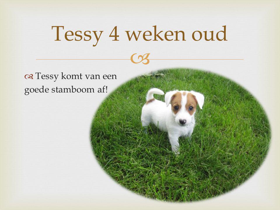   Tessy komt van een goede stamboom af! Tessy 4 weken oud