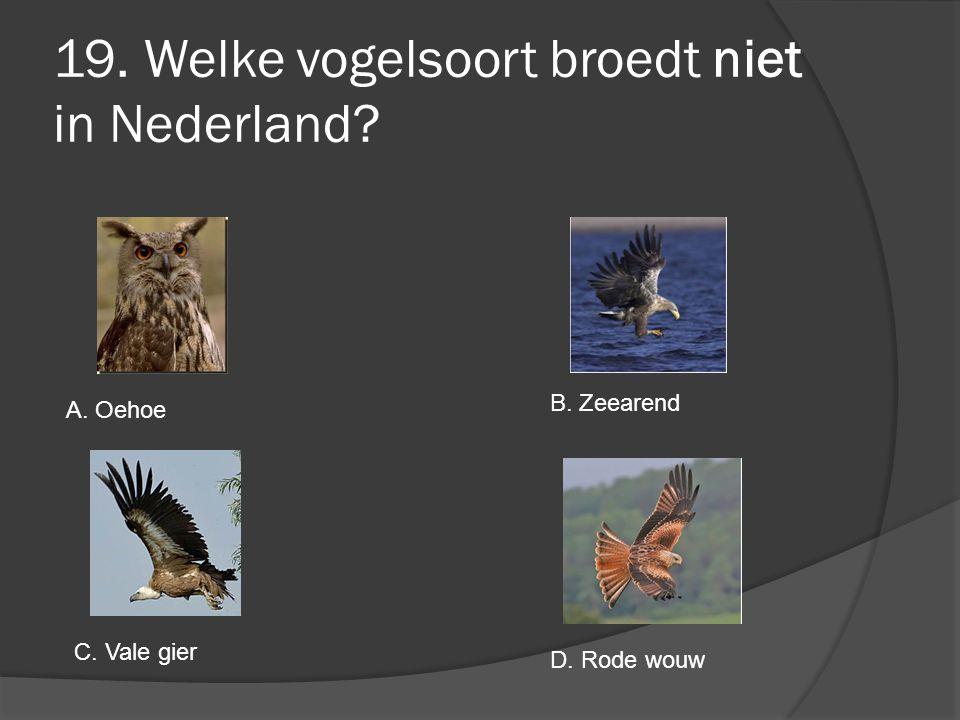 19. Welke vogelsoort broedt niet in Nederland? A. Oehoe B. Zeearend C. Vale gier D. Rode wouw