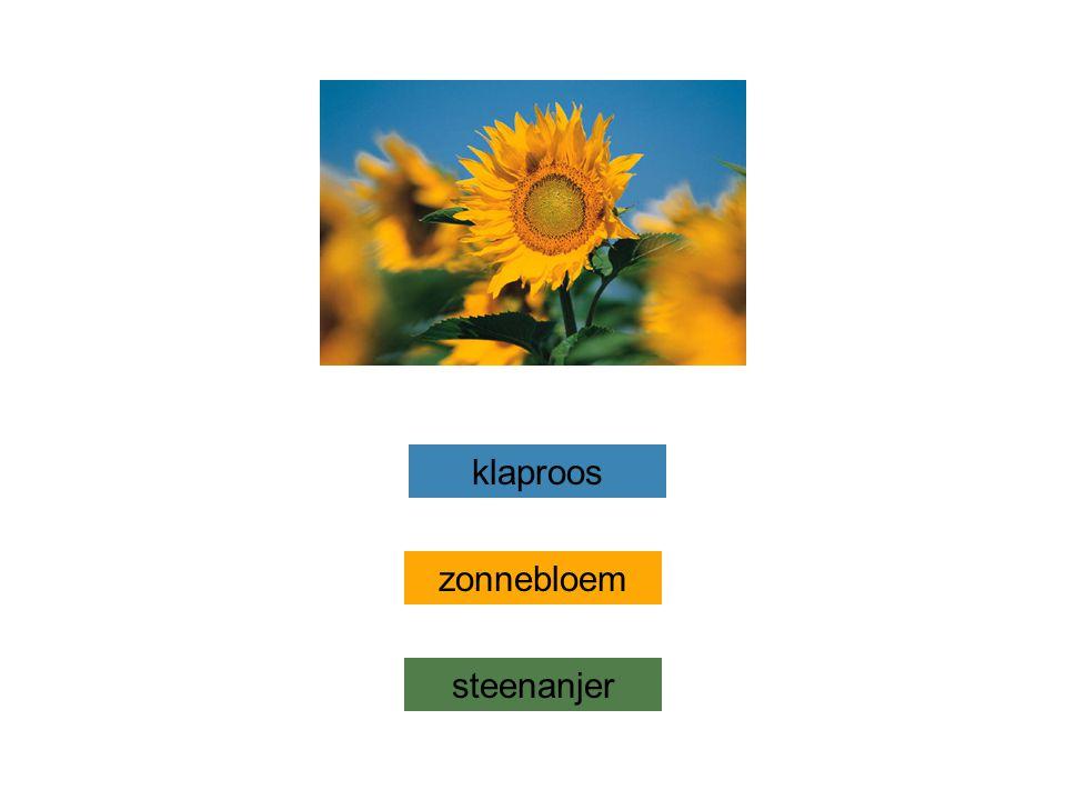 zonnebloem steenanjer klaproos