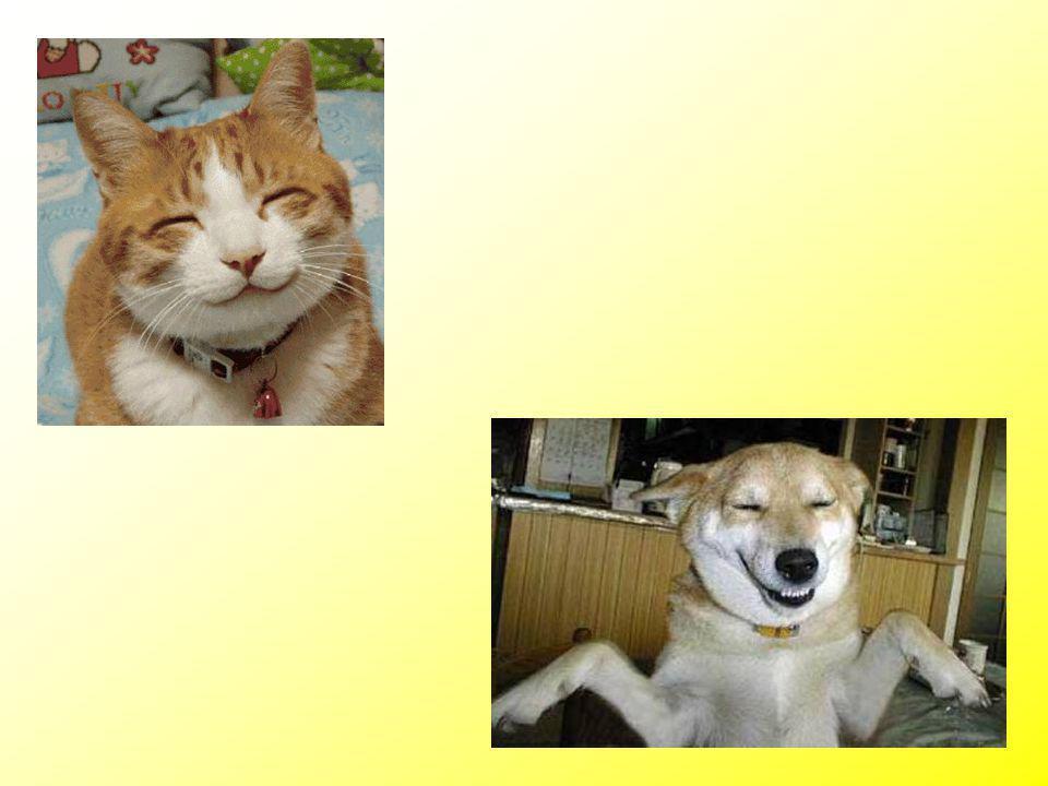 Heb je eigenlijk vandaag nog gelachen??? Je doet 't zo: beweeg de hoeken van je mond naar boven. Ik laat 't je zien…..