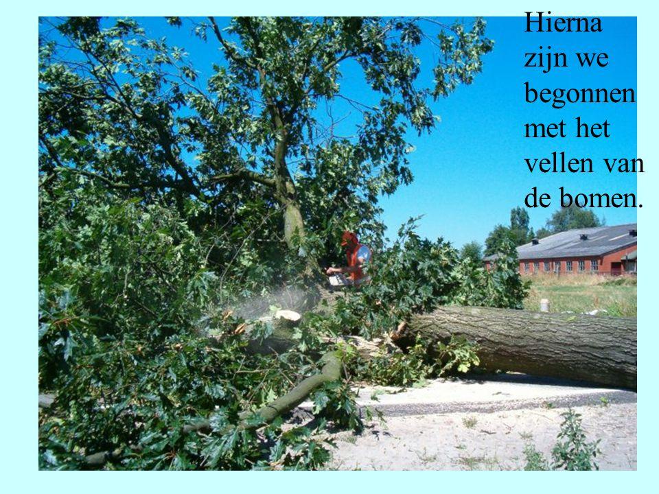 Hierna zijn we begonnen met het vellen van de bomen.