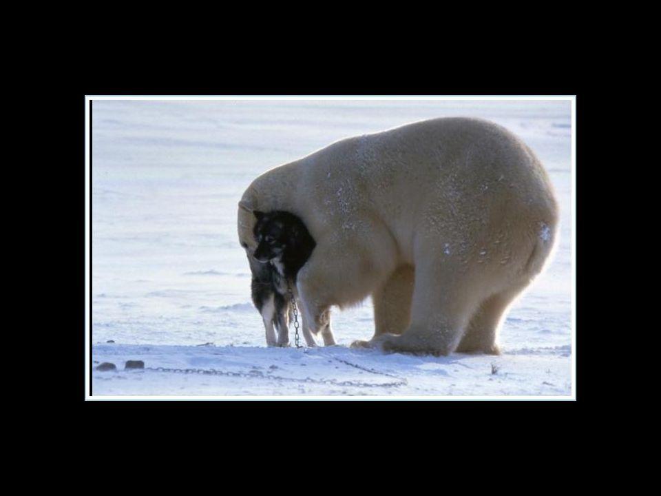 Gelukkig was deze beer echt niet hongerig …