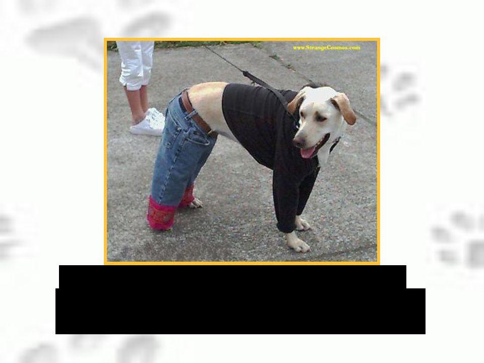 …en ze heeft ook gezegd dat sommige honden zelfs kleren aantrekken.