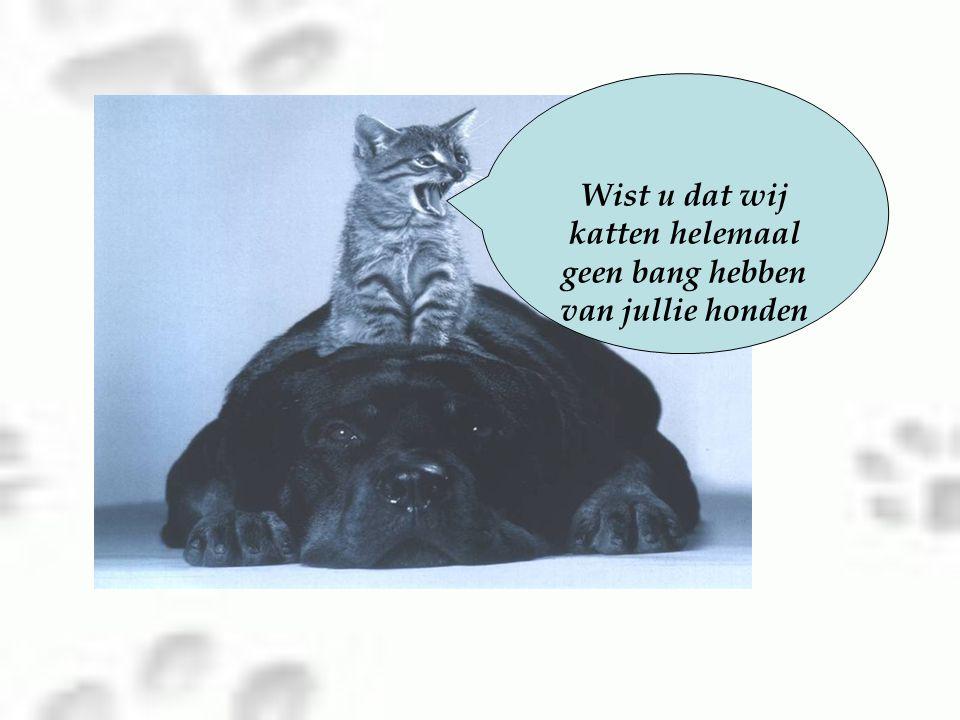 Wist u dat wij katten helemaal geen bang hebben van jullie honden