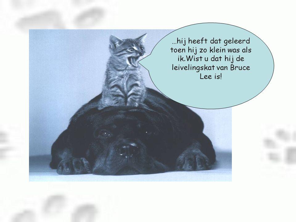 …hij heeft dat geleerd toen hij zo klein was als ik.Wist u dat hij de leivelingskat van Bruce Lee is!