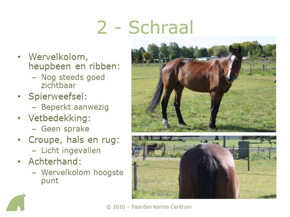© 2010 – Paarden Kennis Centrum 2 - Schraal • Wervelkolom, heupbeen en ribben: – Nog steeds goed zichtbaar • Spierweefsel: – Beperkt aanwezig • Vetbed