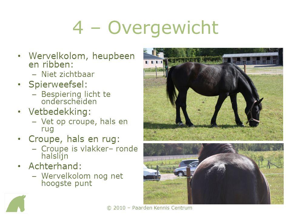 © 2010 – Paarden Kennis Centrum 4 – Overgewicht • Wervelkolom, heupbeen en ribben: – Niet zichtbaar • Spierweefsel: – Bespiering licht te onderscheide