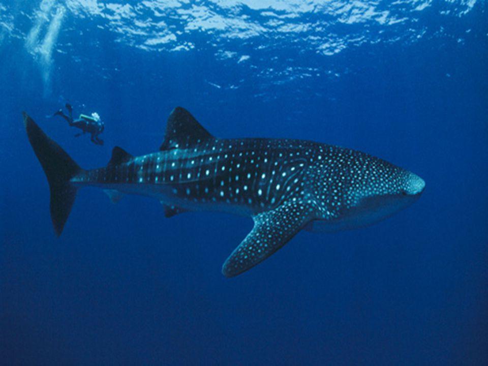 Doubilet ontving zijn 1ste prijs, the Underwater Sara Prize, hem toegekend door het Italiaans tijdschrift The World Submerged ,