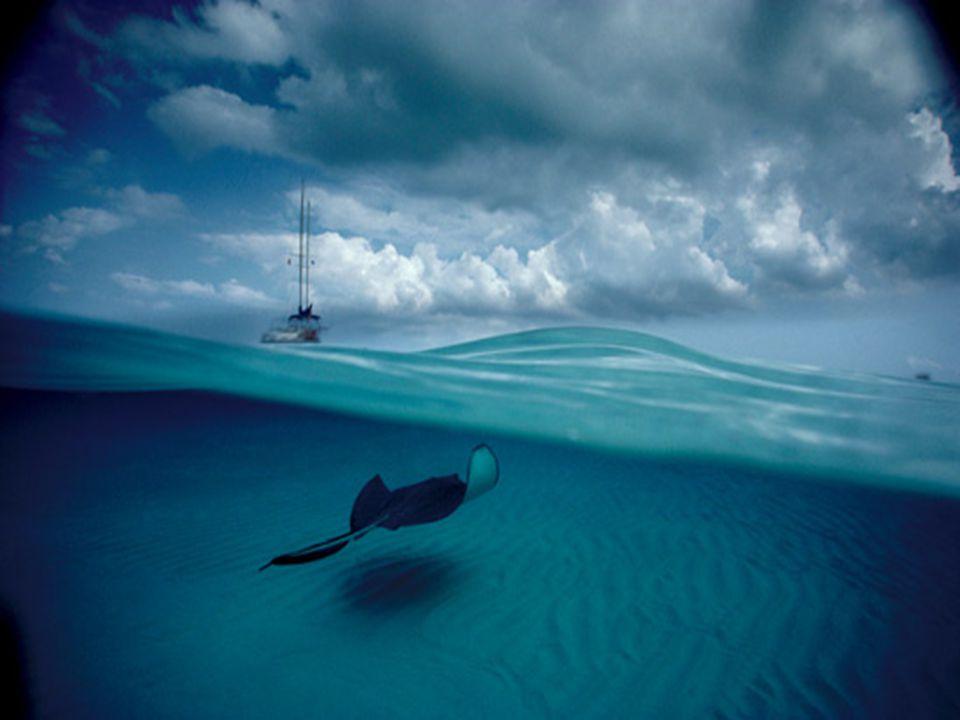 David Doubilet is geboren in New York in 1946, en begon te duiken toen hij amper 8 jaren oud was.