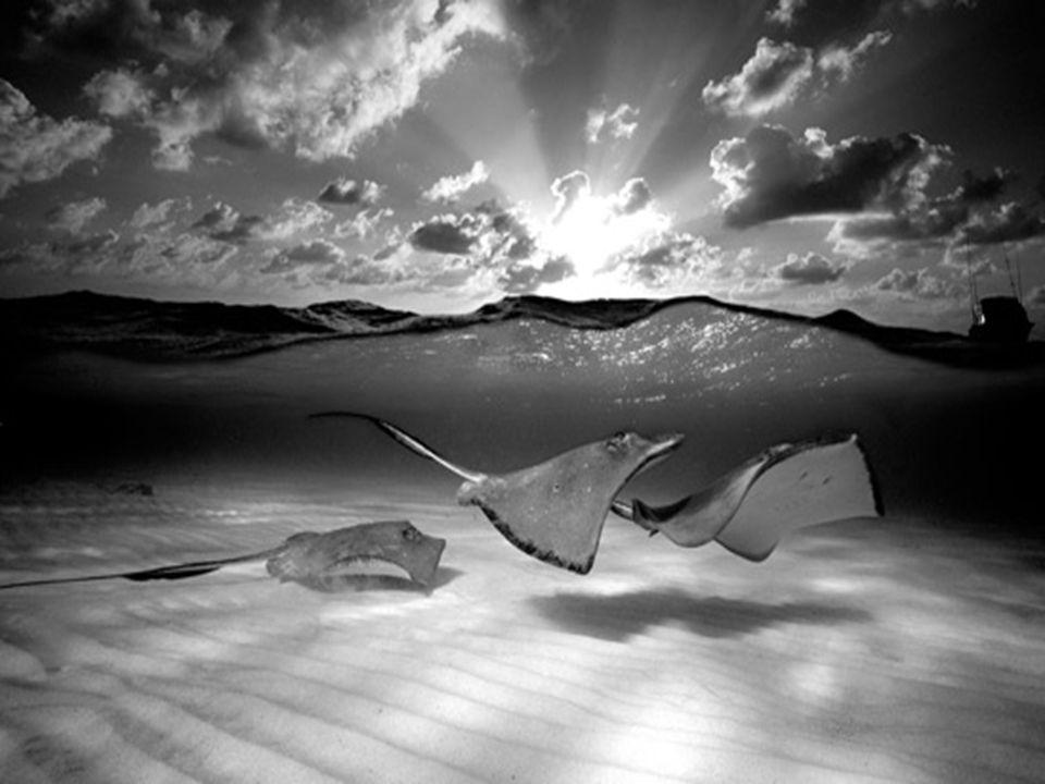 Meer dan 15,000 mensen hebben zijn Exhibitie van Onderwater Fotografie bezocht, die in Lissabon 2003 werd gehouden.