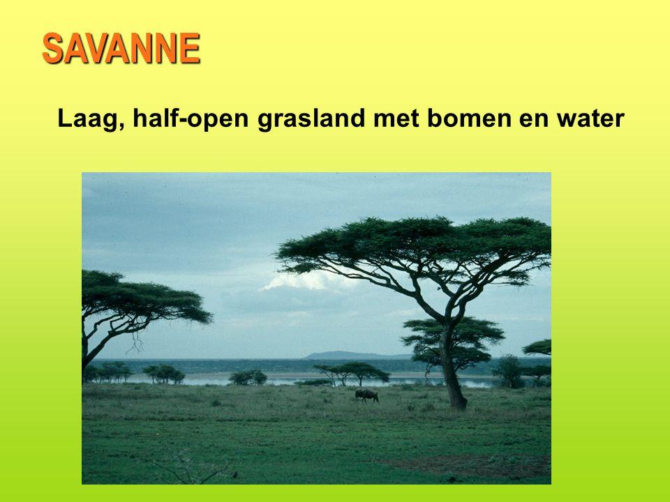 Laag, half-open grasland met bomen en water SAVANNE