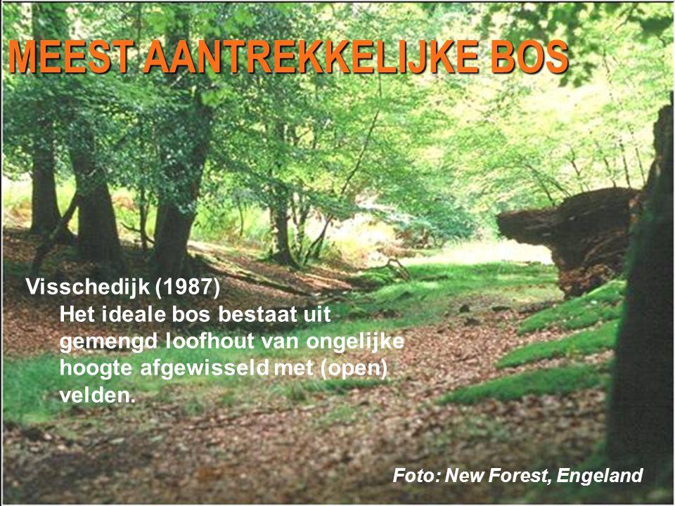 MEEST AANTREKKELIJKE BOS Foto: New Forest, Engeland Visschedijk (1987) Het ideale bos bestaat uit gemengd loofhout van ongelijke hoogte afgewisseld met (open) velden.