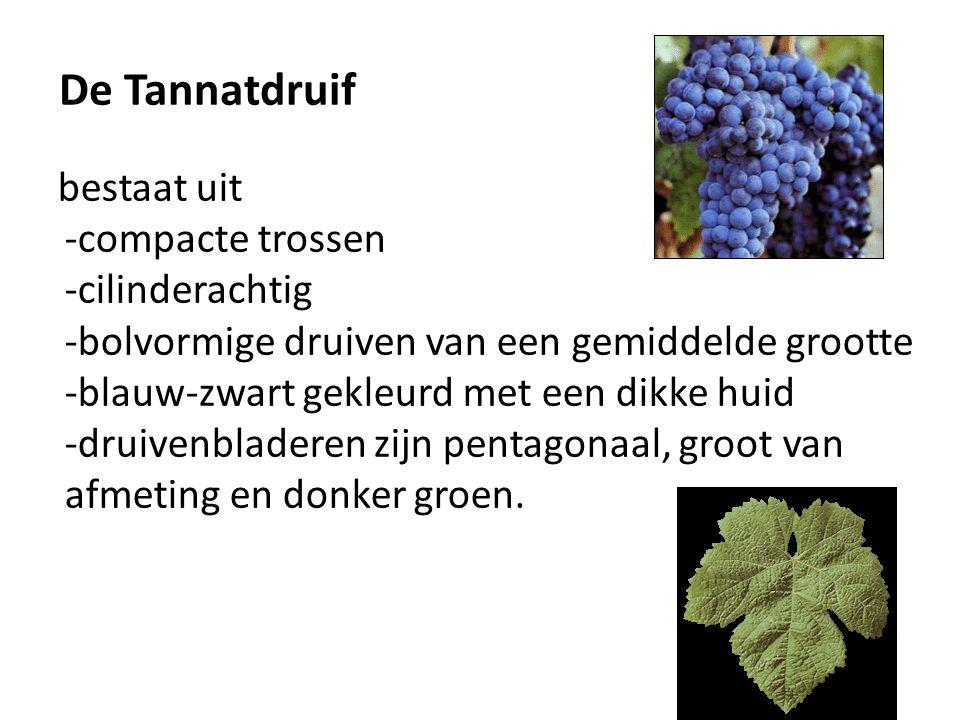De Tannatdruif bestaat uit -compacte trossen -cilinderachtig -bolvormige druiven van een gemiddelde grootte -blauw-zwart gekleurd met een dikke huid -