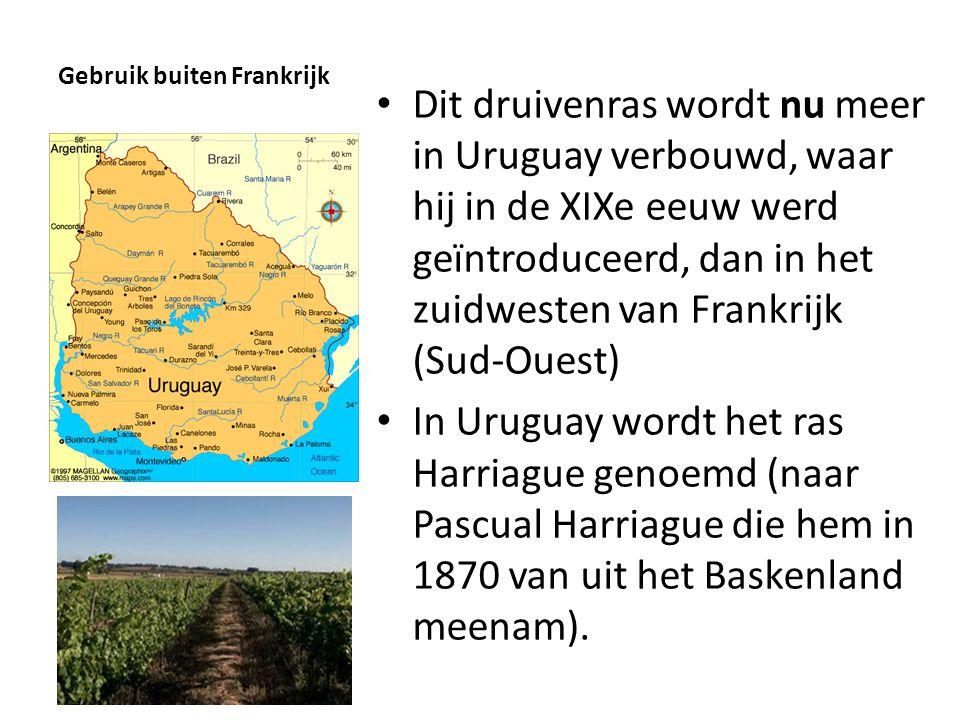 Gebruik buiten Frankrijk • Dit druivenras wordt nu meer in Uruguay verbouwd, waar hij in de XIXe eeuw werd geïntroduceerd, dan in het zuidwesten van F
