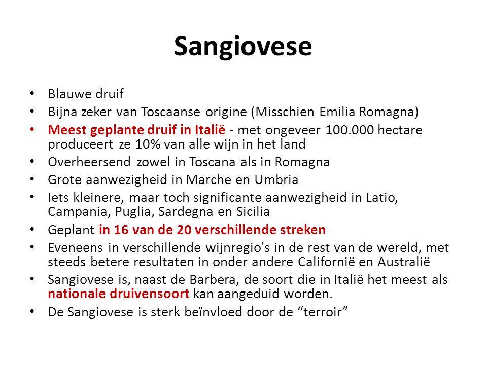 Sangiovese • Blauwe druif • Bijna zeker van Toscaanse origine (Misschien Emilia Romagna) • Meest geplante druif in Italië - met ongeveer 100.000 hecta
