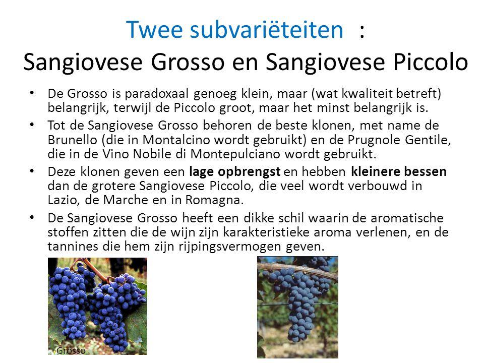 Twee subvariëteiten : Sangiovese Grosso en Sangiovese Piccolo • De Grosso is paradoxaal genoeg klein, maar (wat kwaliteit betreft) belangrijk, terwijl