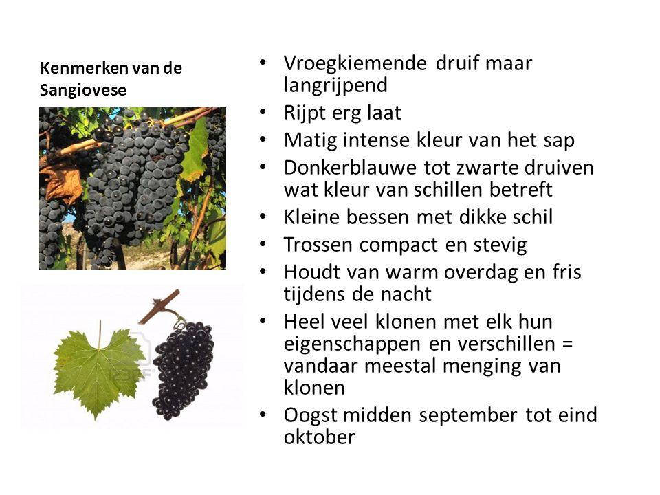 Kenmerken van de Sangiovese • Vroegkiemende druif maar langrijpend • Rijpt erg laat • Matig intense kleur van het sap • Donkerblauwe tot zwarte druive