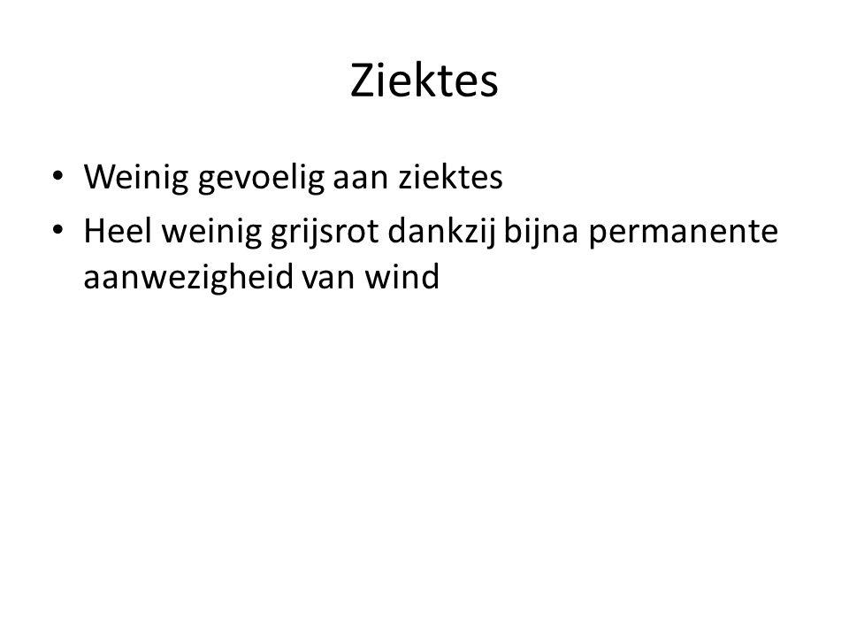 Ziektes • Weinig gevoelig aan ziektes • Heel weinig grijsrot dankzij bijna permanente aanwezigheid van wind