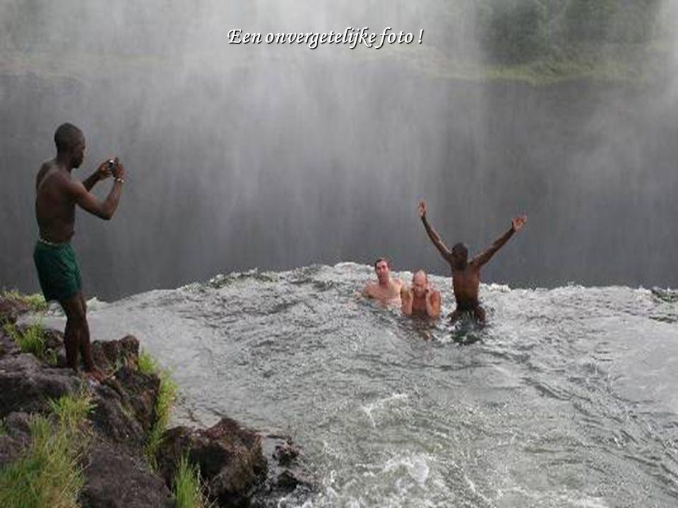 Een duik in het zwembad !