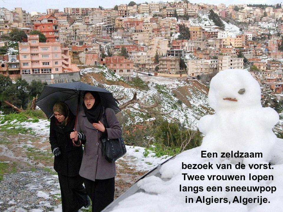 Ongewoon koud, zelfs in Algerije, het noorden van Afrika, wat zwaar is aangetast door de vorst met een zeldzame sneeuwval